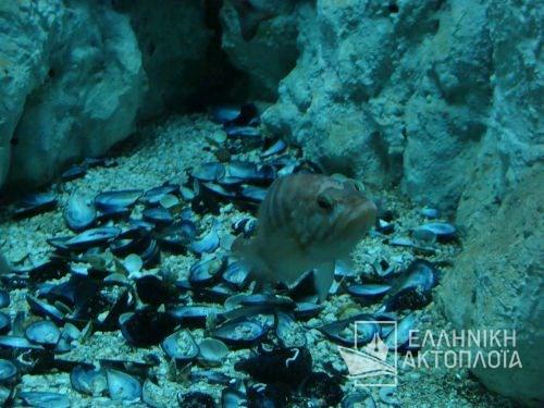 aquarium at heraklion (creta)