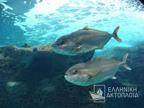 icons from aquarium at heraklion (creta)