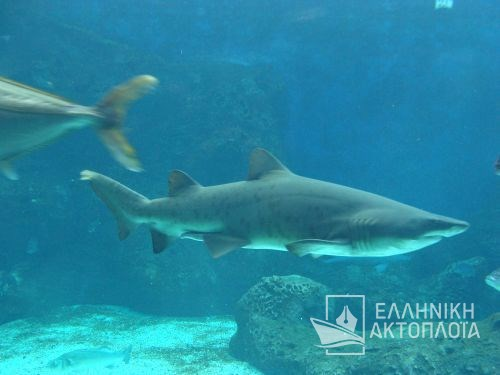 thalassokosmos (aquarium of crete)-shark