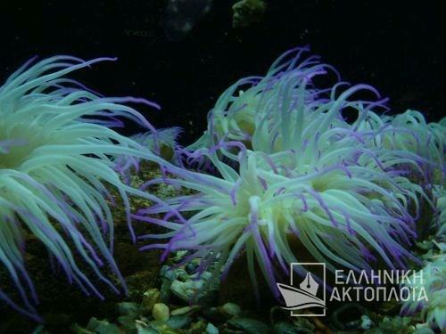 thalassokosmos (aquarium)